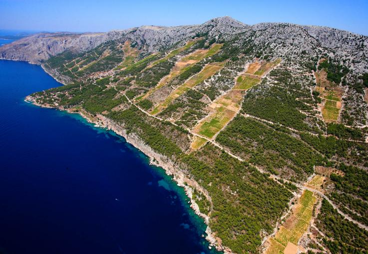 Beautiful vineyards on eastern part of Hvar Island.