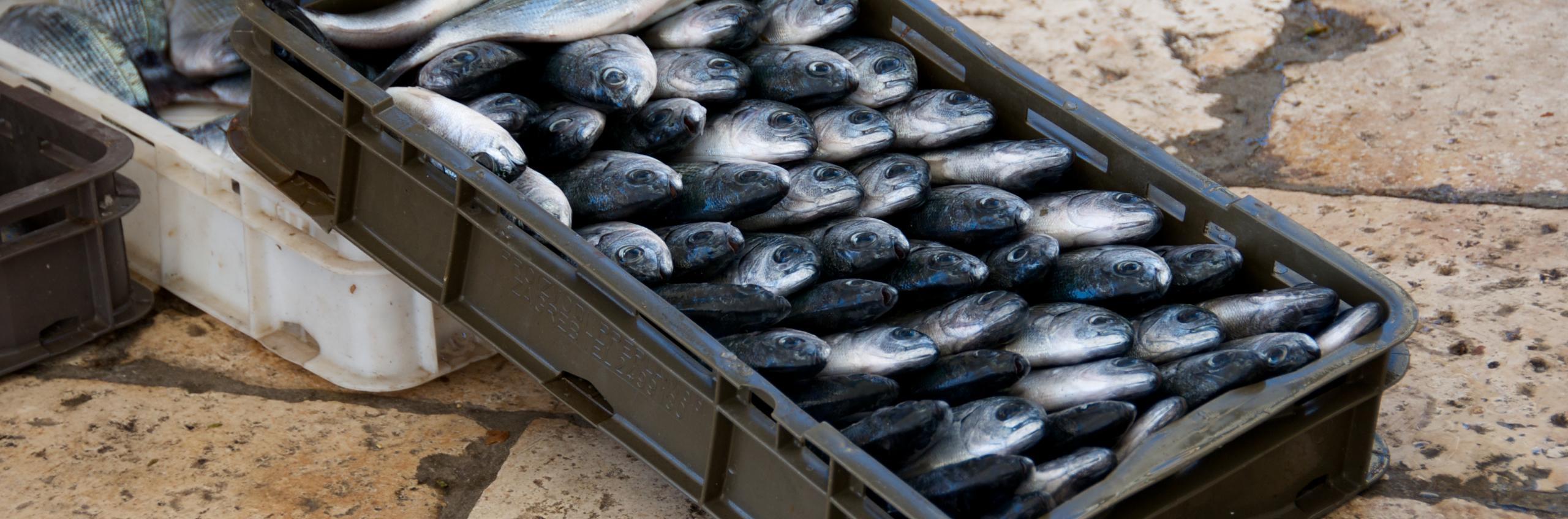 Croatia: Daily fresh fish